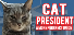 Cat President A More Purrfect Union